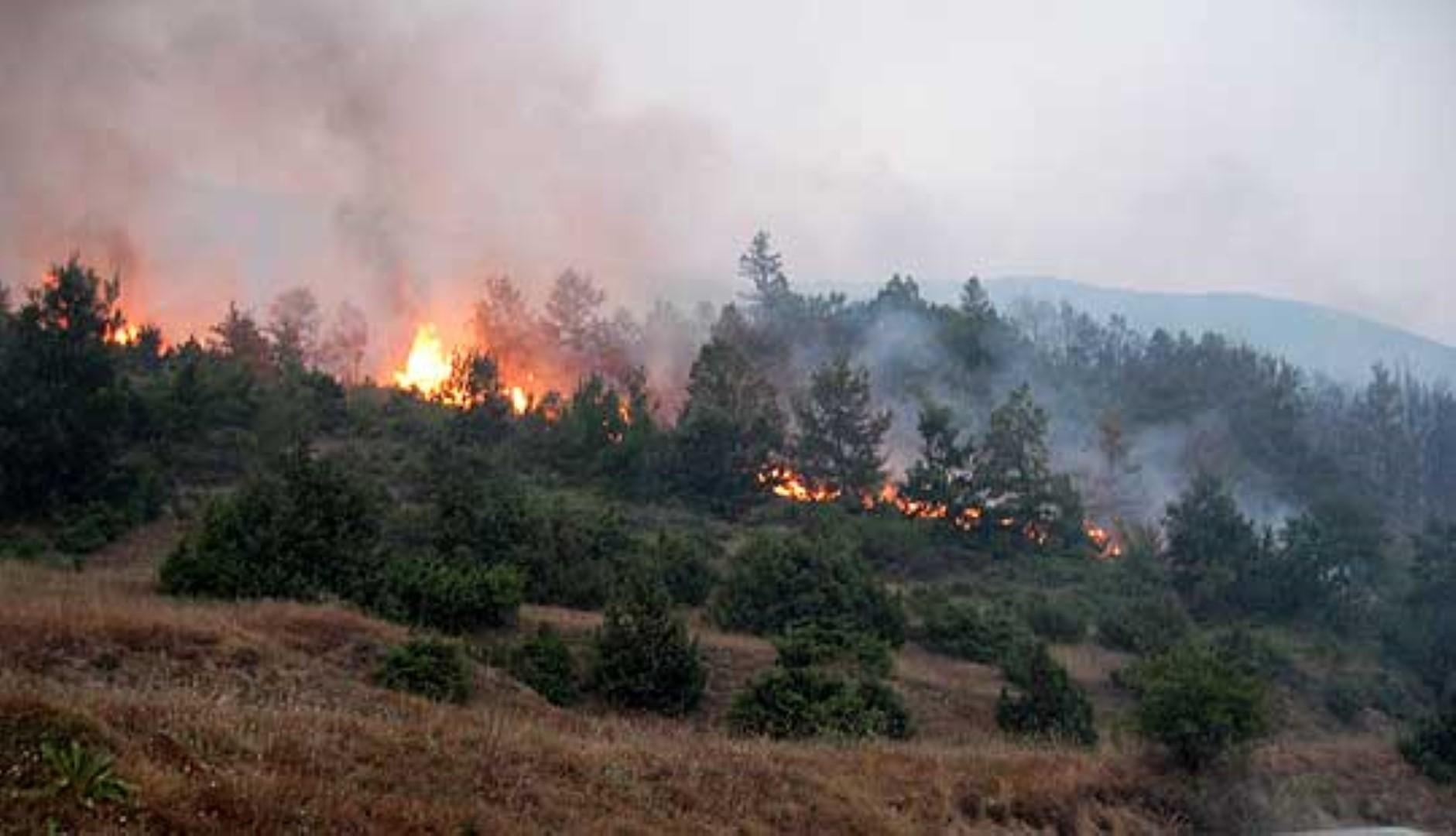 Голем шумски пожар кај велешките села Чолошево и Дурутовец