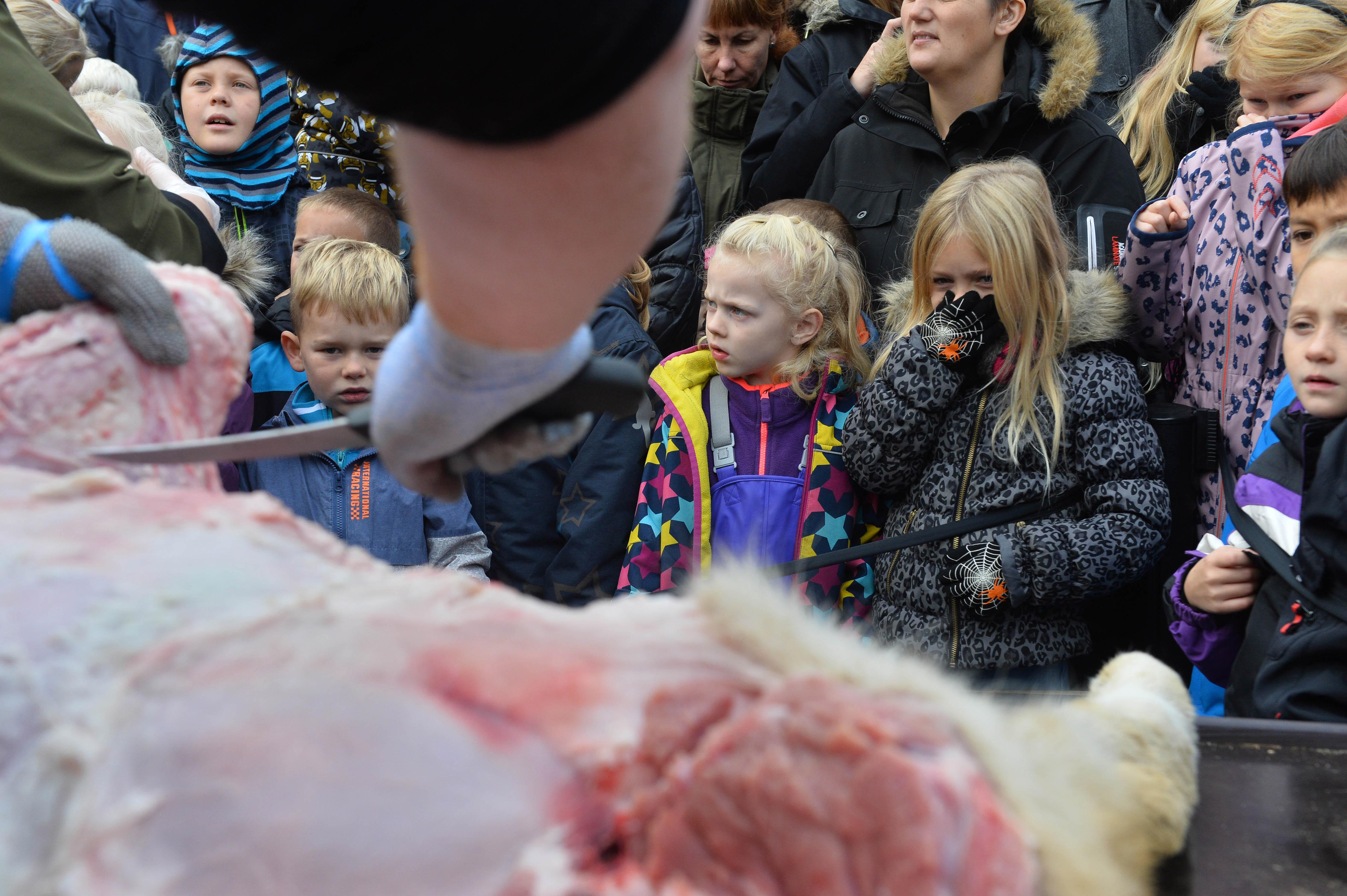 """""""Час по анатомија"""" во данската зоолошка: Децата се згрозиле од грозоморниот настан"""