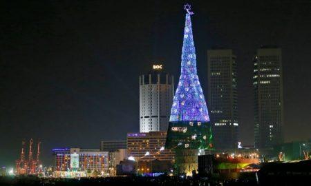 Највисоката елка во светот