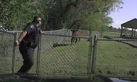 """РАСПОЛОЖЕНИЕ НА ДЕНОТ: """"Луда"""" крава нападна полицаец (ВИДЕО)"""