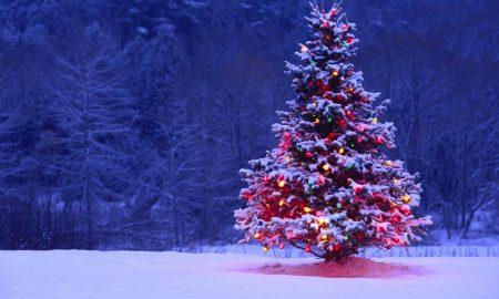 Правилно китење на новогодишната елка
