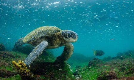 Островите Галапагос - таму каде што царуваат животните